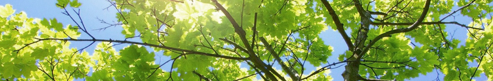 bg-trees